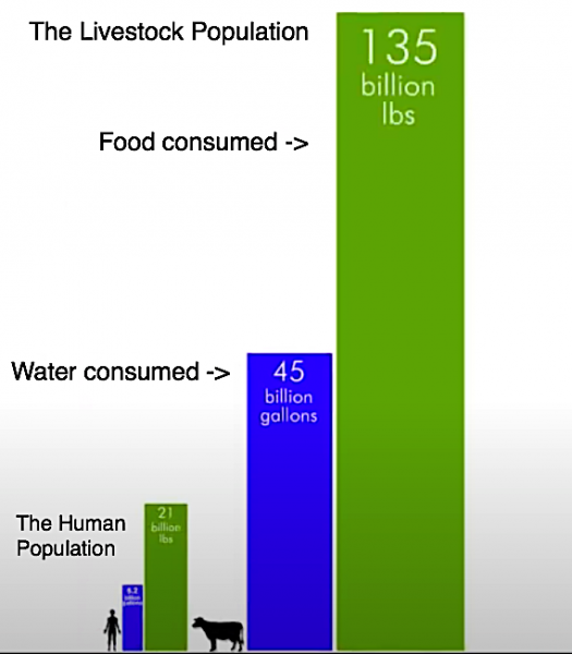 Food:water consumption -2.png